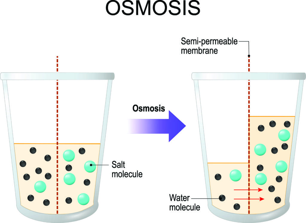 Osmosis diagram